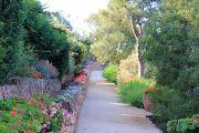 passage-of-geraniums