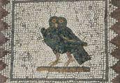italica-owl