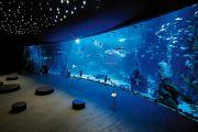 deep-ocean1
