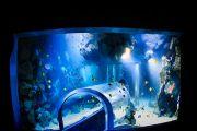 deep-ocean2